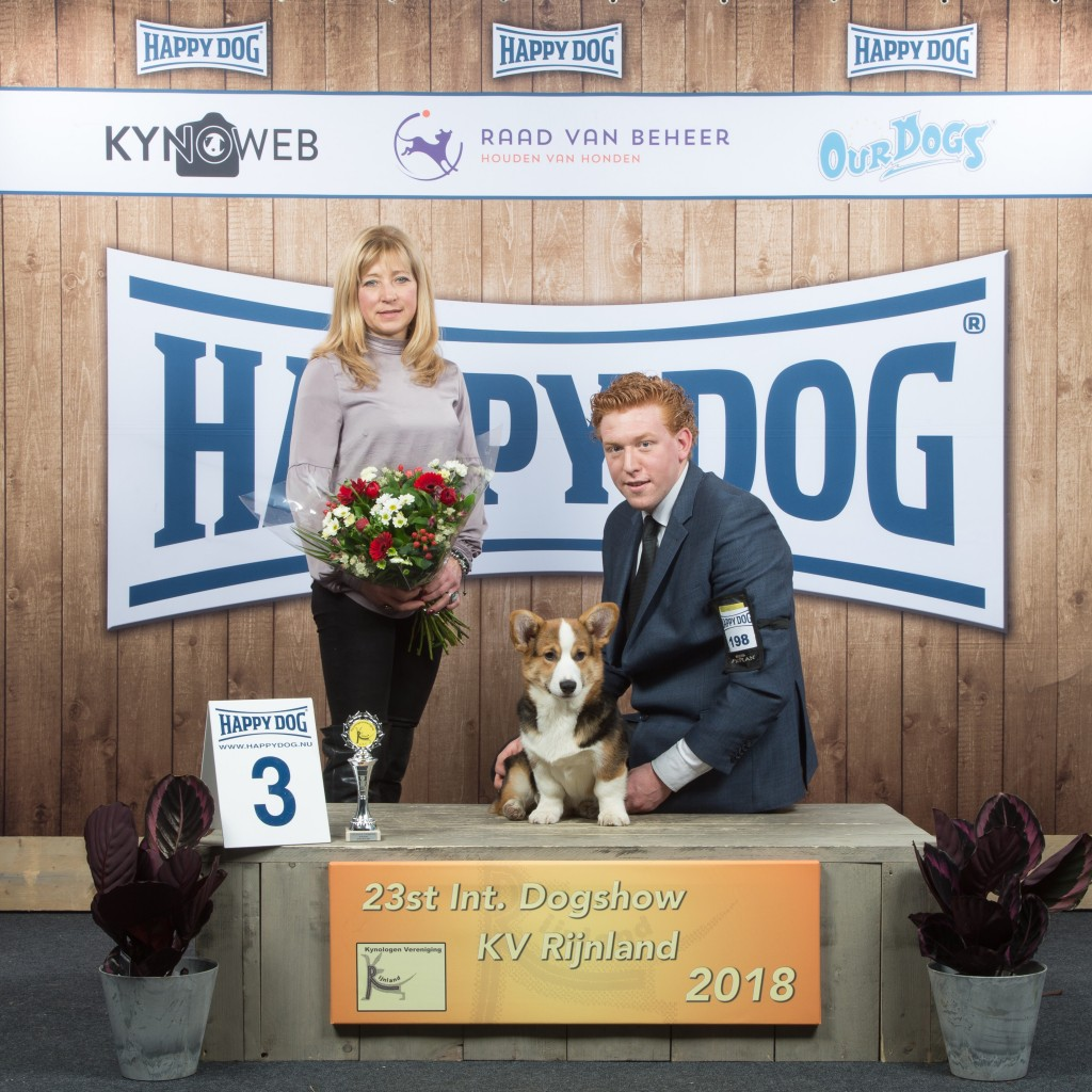 minor_puppy_3_rijnland_2018_kynoweb_-20180317-14-40-26-ky3_3354-1.jpg